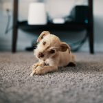 Things to Look For in a Good Carpet Cleaning Company